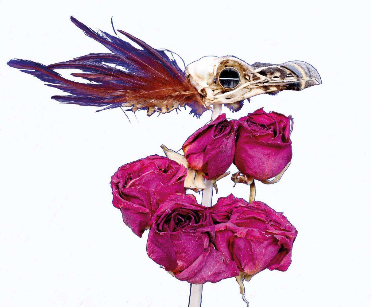 Razorbill and Roses Twink Addison