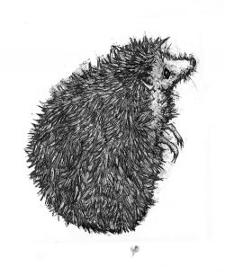 Lady hog